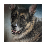 Portrait of a Shepherd Giclee Print by Jai Johnson