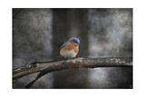 Last Day Home Bluebird Reproduction procédé giclée par Jai Johnson