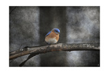 Last Day Home Bluebird Giclee Print by Jai Johnson