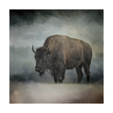 Stormy Day Buffalo Giclee Print by Jai Johnson
