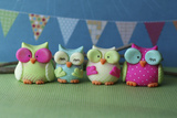 Owls Multi Color Brights Photographic Print