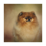 Proud Pomeranian Giclee Print by Jai Johnson