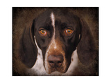 German Shorthaired Pointer Portrait Giclee Print by Jai Johnson