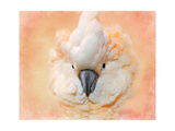 Salmon Crested Cockatoo Portrait 2 Giclee Print by Jai Johnson