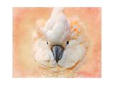 Salmon Crested Cockatoo Portrait 2 Giclee Print by Jai Johnson