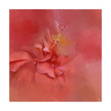 Salmon Hibiscus 2 Giclee Print by Jai Johnson