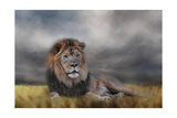 Lion Waiting for the Storm Giclee-trykk av Jai Johnson
