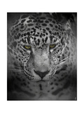 An Intense Stare Giclee-trykk av Jai Johnson