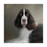 Waiting Patiently English Springer Spaniel Giclee Print by Jai Johnson
