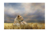 Lioness after the Storm Giclee-trykk av Jai Johnson