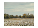 Cotton Field in Autumn Giclee Print by Jai Johnson