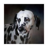 The Firemans Dog Dalmatian Giclee Print by Jai Johnson