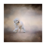 Bichon on the Go Giclee Print by Jai Johnson