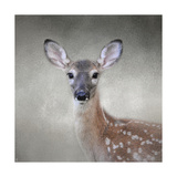 Little Miss Lashes White Tailed Fawn Giclee Print by Jai Johnson