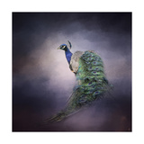 Peacock 11 Giclee Print by Jai Johnson