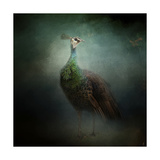 Peacock 2 Giclee Print by Jai Johnson