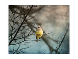 Waxwing at Winter Sunset Giclee Print by Jai Johnson