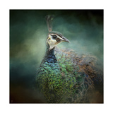 Peacock 12 Giclee Print by Jai Johnson