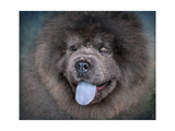 Blue Chow Chow Portrait Giclee Print by Jai Johnson