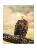 The Queen at Rest Bald Eagle Giclee Print by Jai Johnson