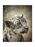 Snow Leopard Portrait Giclee Print by Jai Johnson
