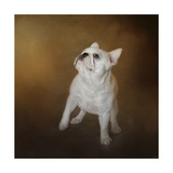 Little Beggar French Bulldog Giclee Print by Jai Johnson