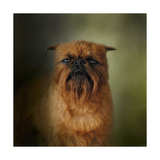 The Brussels Griffon Giclee Print by Jai Johnson