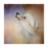 Wind in Her Hair Chinese Crested Giclee Print by Jai Johnson