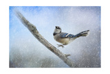 Bluejay in the Snow Giclee Print by Jai Johnson