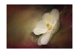 Magnolia in Bloom 1 Giclee-trykk av Jai Johnson