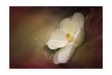 Magnolia in Bloom 1 Giclée-Druck von Jai Johnson