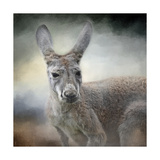 Western Grey Kangaroo Giclee Print by Jai Johnson