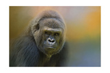 Portrait of a Gorilla Giclee Print by Jai Johnson