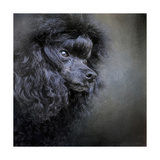 Snack Spotter Toy Black Poodle Giclee Print by Jai Johnson