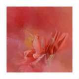 Salmon Hibiscus 3 Giclee Print by Jai Johnson