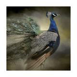Peacock 5 Giclee Print by Jai Johnson