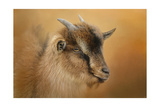 Portrait of a Nubian Dwarf Goat Giclee Print by Jai Johnson
