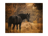 Horse and the Haystack Giclee Print by Jai Johnson