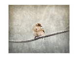 Sparrow Braving the Cold Giclee-trykk av Jai Johnson