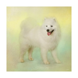 Samoyed in Spring Giclee Print by Jai Johnson