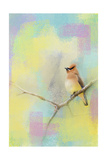 Song of the Waxwing Giclee Print by Jai Johnson