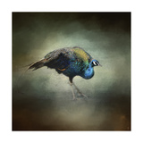 Peacock 10 Giclee Print by Jai Johnson