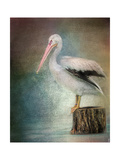 Perched Pelican Giclee Print by Jai Johnson