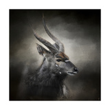 Waiting for the Storm Nyala Buck Giclee Print by Jai Johnson