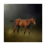 Copper Colt in the Moon Light Giclee Print by Jai Johnson