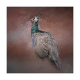 Peacock 7 Giclee Print by Jai Johnson
