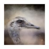 Poised Ostrich Giclee Print by Jai Johnson