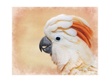 Salmon Crested Cockatoo Portrait 1 Giclee Print by Jai Johnson