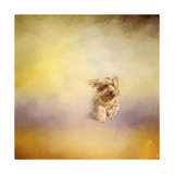 Yorkie Running into the Wind Giclee Print by Jai Johnson