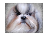 Shihtzu Portrait Giclee Print by Jai Johnson